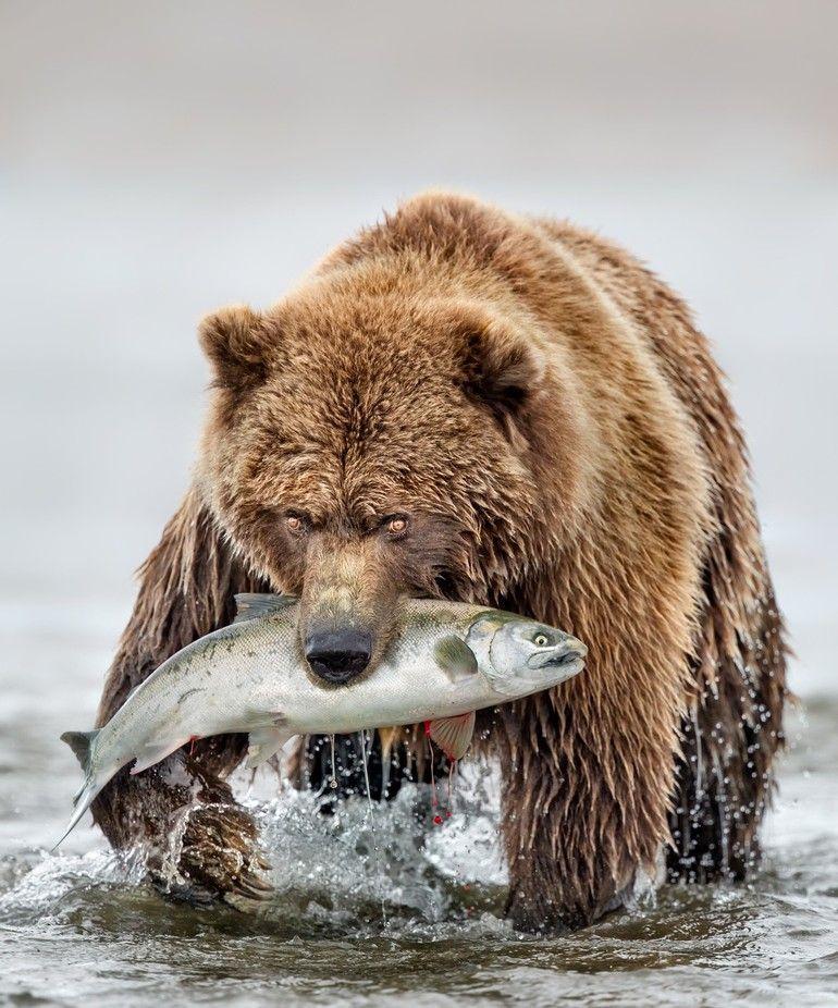 Happy Mama Bear By Anitarossview