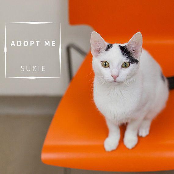 Adopt Me Overlay Cat Dog Adopt Rescue Shelter Pet By Bearcatdesign Animal Shelter Healthy Pets Dog Adoption