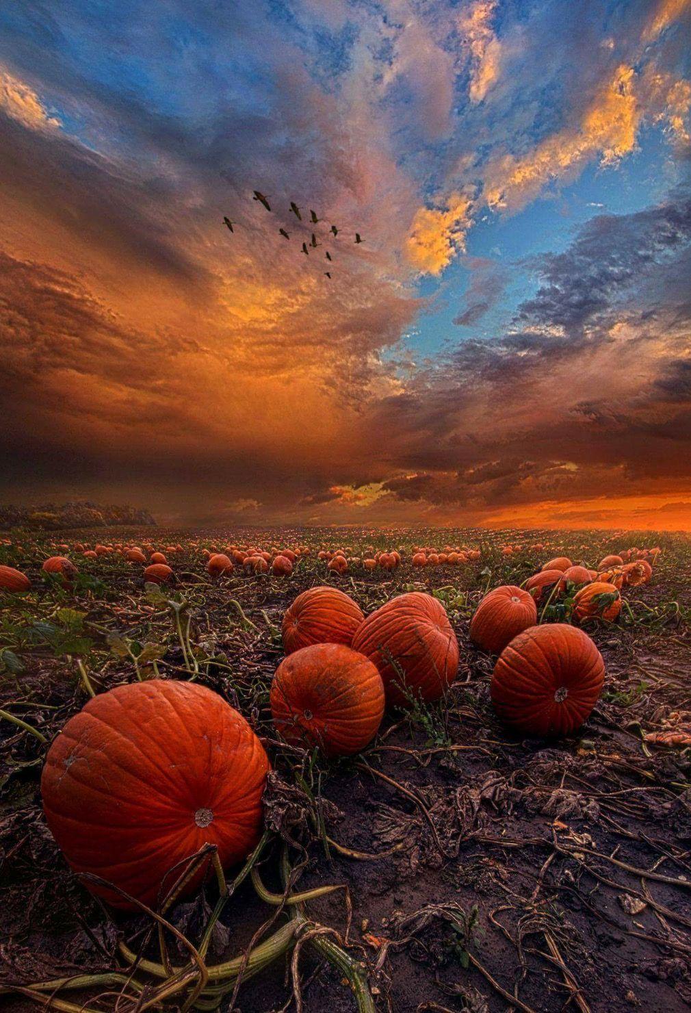 Пин от пользователя Ия на доске НРАВИТСЯ | Осенний пейзаж ...