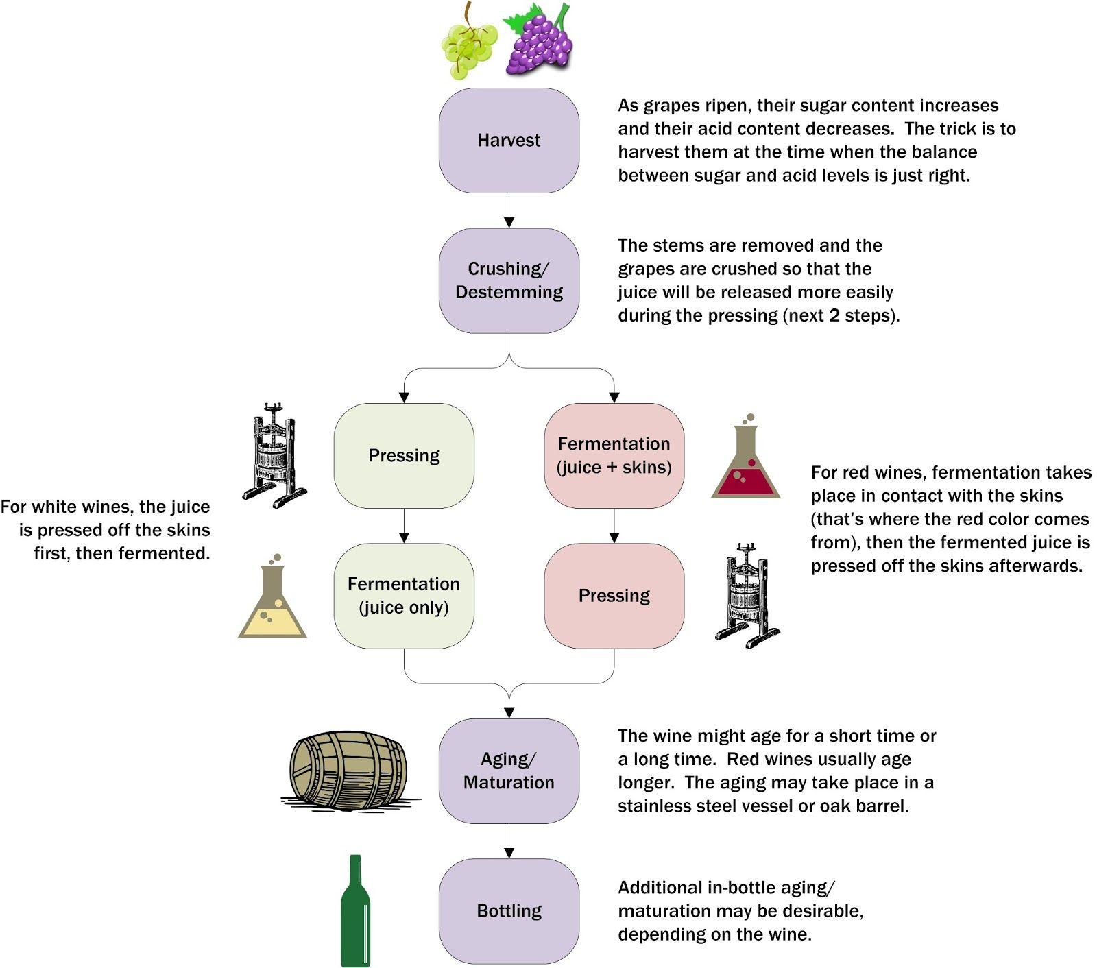 Pin On Wine Making