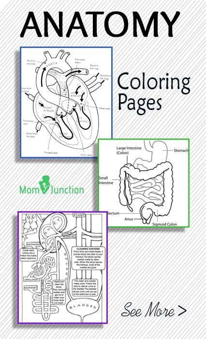 Top 10 Anatomy Coloring Pages For Your Toddler Anatomy Coloring Book,  Teaching Science, Homeschool