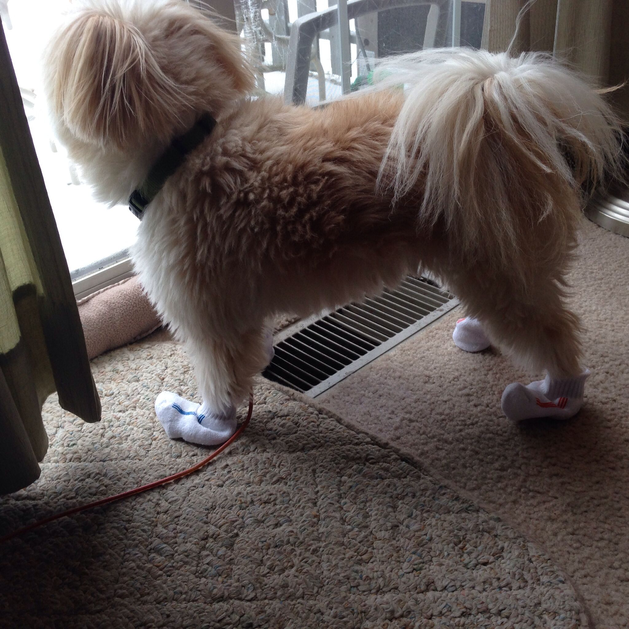 For dogs that won't do booties, baby socks work in a pinch as protection from the ice.