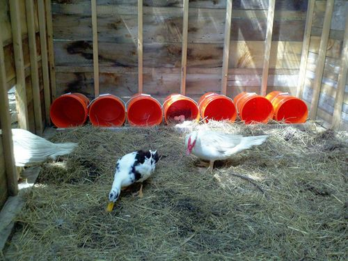 Easy and cheap nest boxes animal houses beds for How to build a duck pen