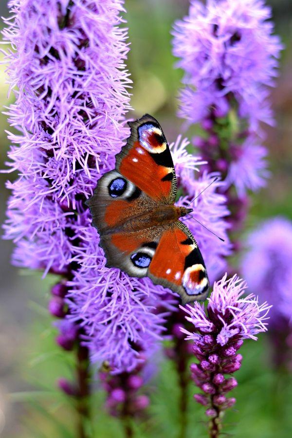 Butterfly by Caroline  bp, via 500px