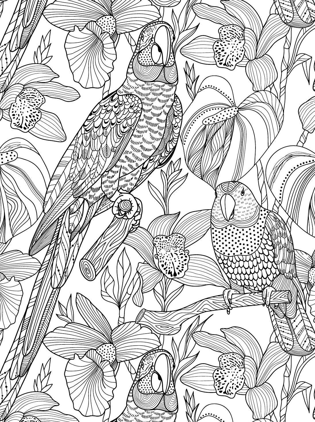 Kreativ fargelegging 100 m nstre av planter og dyr colouring book Bird coloring pages
