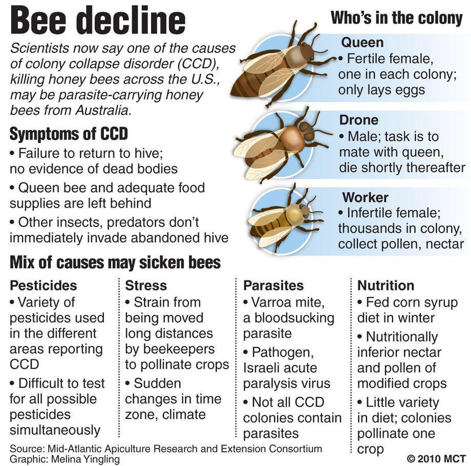 Colony Collapse Disorder Honey Bee | Neonicotinoid Pesticides Bee ...