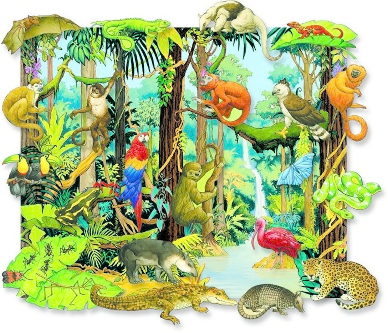 The Rain Forest animals ThingLink Rainforest animals