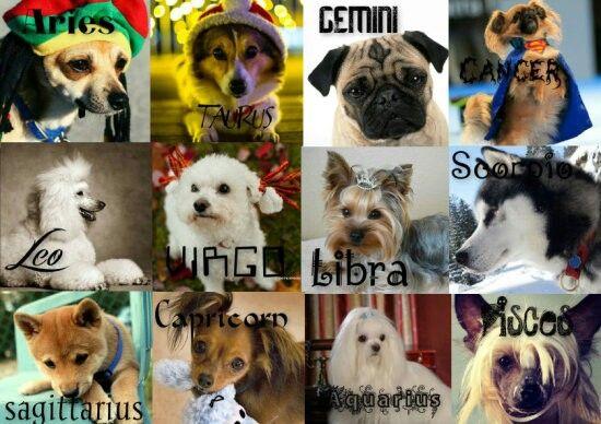 Dog breed zodiac | i am ♓ | Zodiac signs, Zodiac, Different