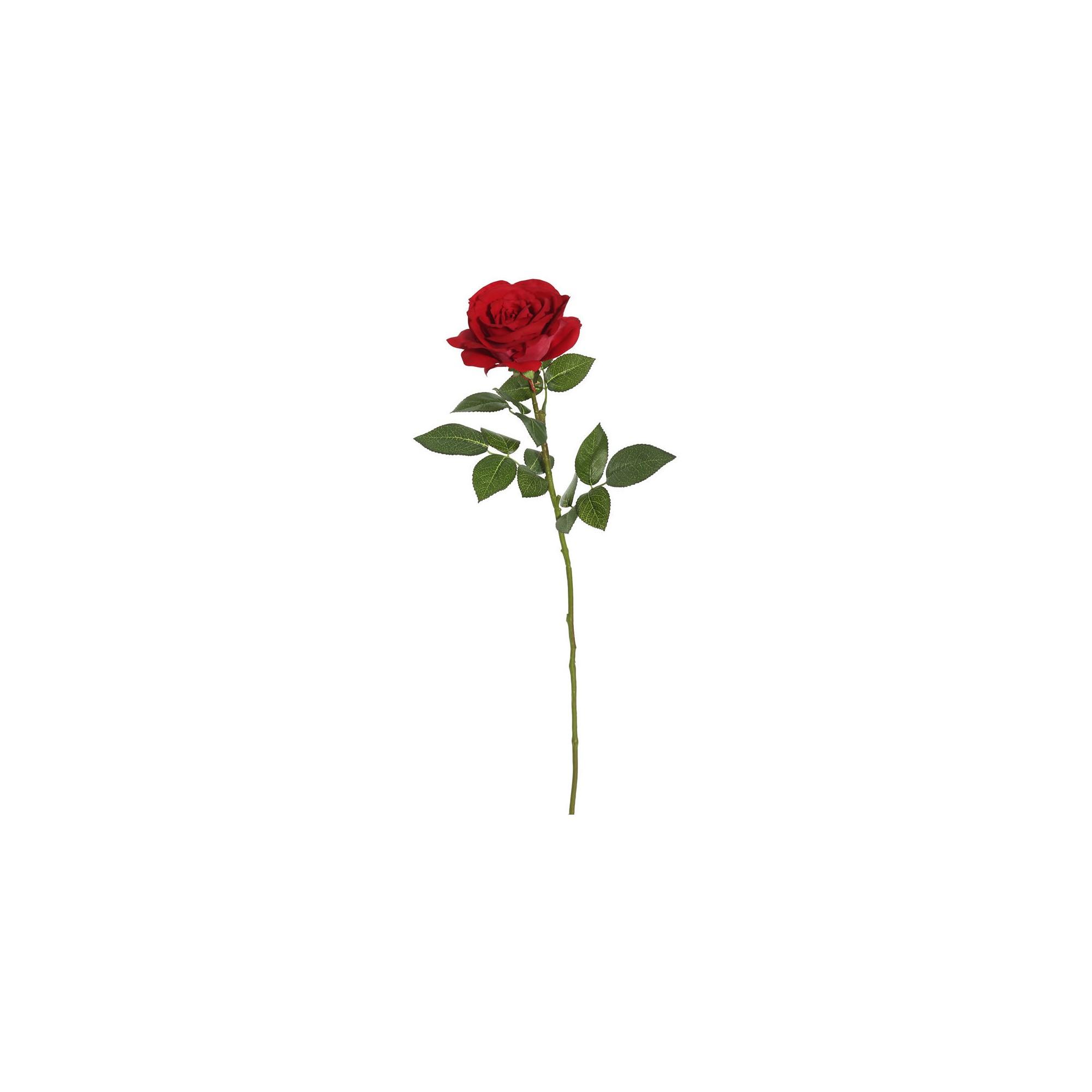 e99094181674b0eabe4beb3aaab1f6a5 » Aesthetic Rose Drawing