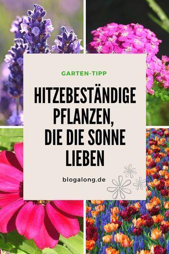 Hitzebeständige Pflanzen, die die Sonne lieben #balkonblumen