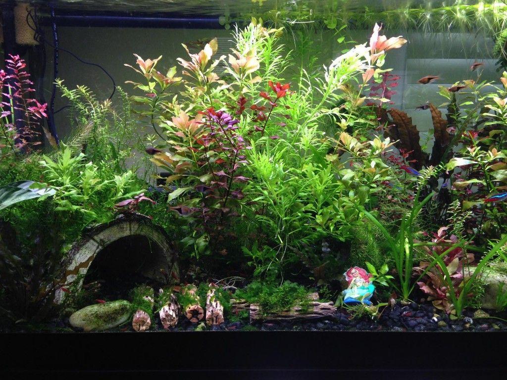 Live Plant Aquarium Substrate Aquarium Design Ideas Planted