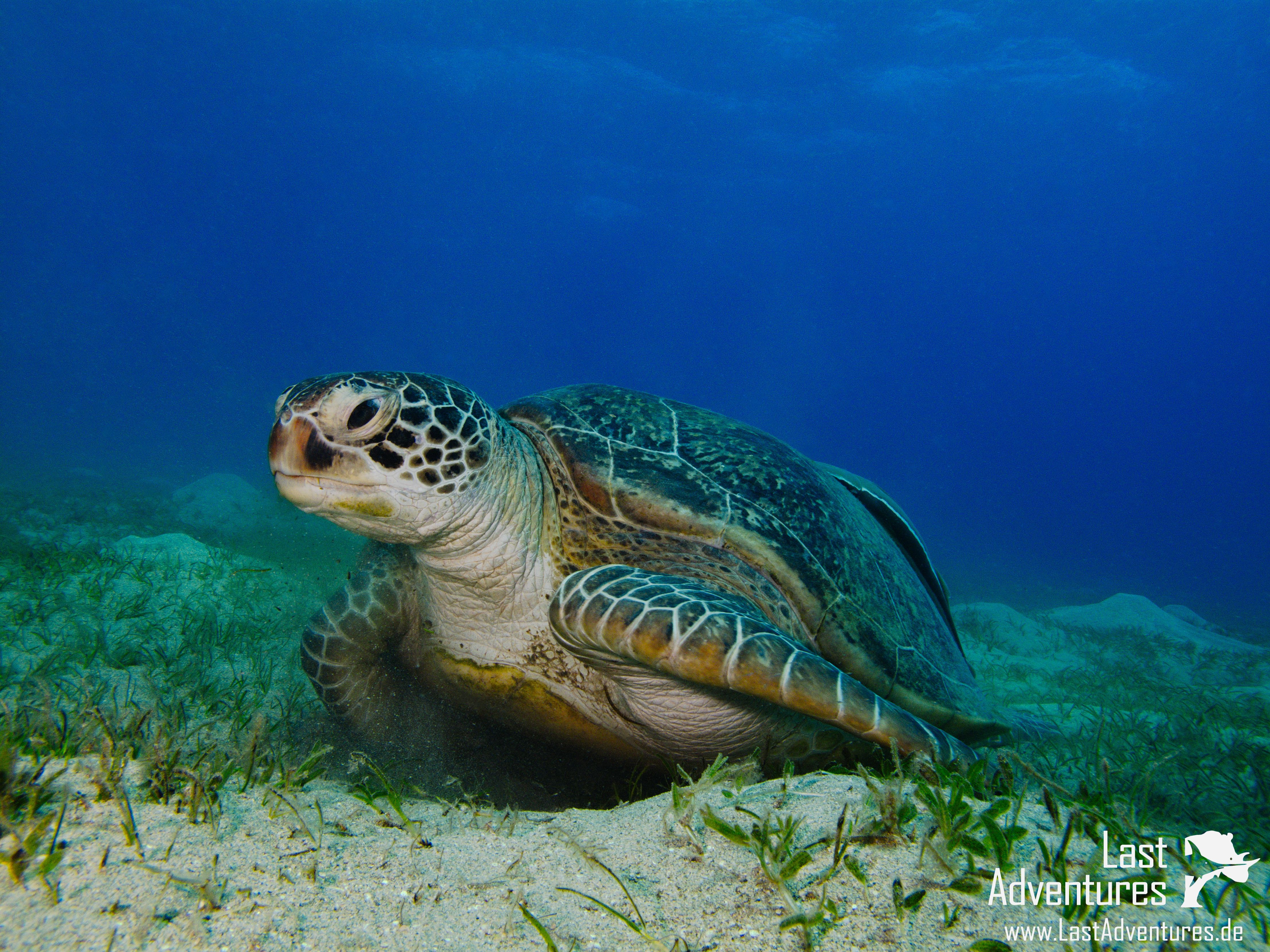 Schildkröte fotografiert in Ägypten #Schildkröte #turtle #ägypten ...