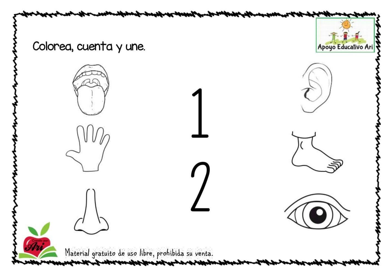Cuaderno Completo Para Trabajar El Cuerpo Humano En Infantil Y Primaria El Cuerpo Humano Infantil Cuerpo Humano Para Ninos Cuerpo Humano