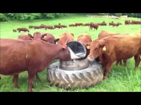 Intelligent Technology Smart Farming Automatic milking