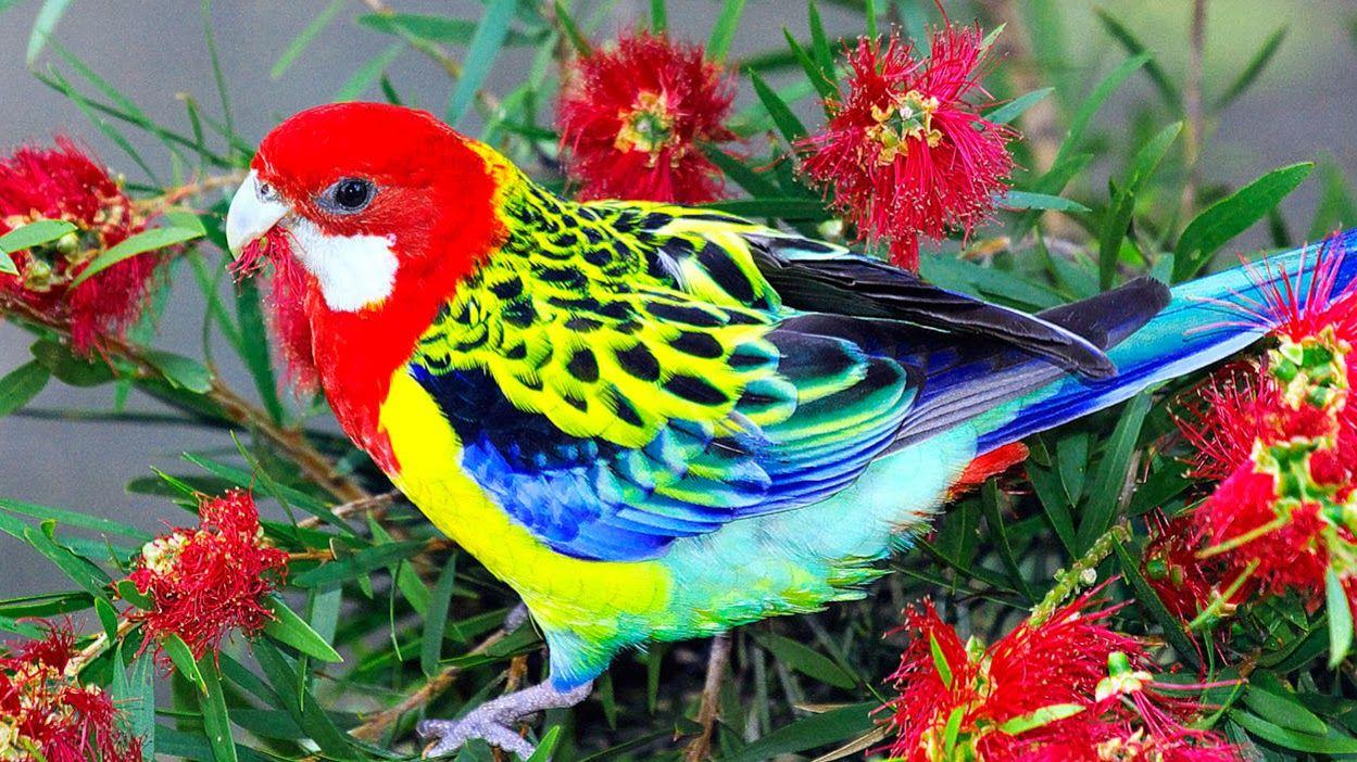 beautiful birds wallpapers free download Birds