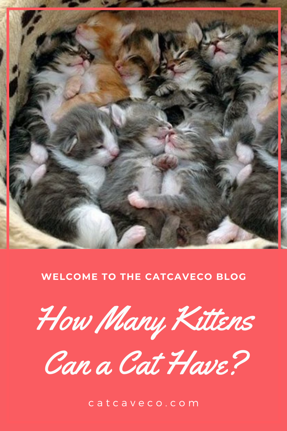 How Many Kittens Can A Cat Have In 2020 Cats Kittens Cat Facts Funny