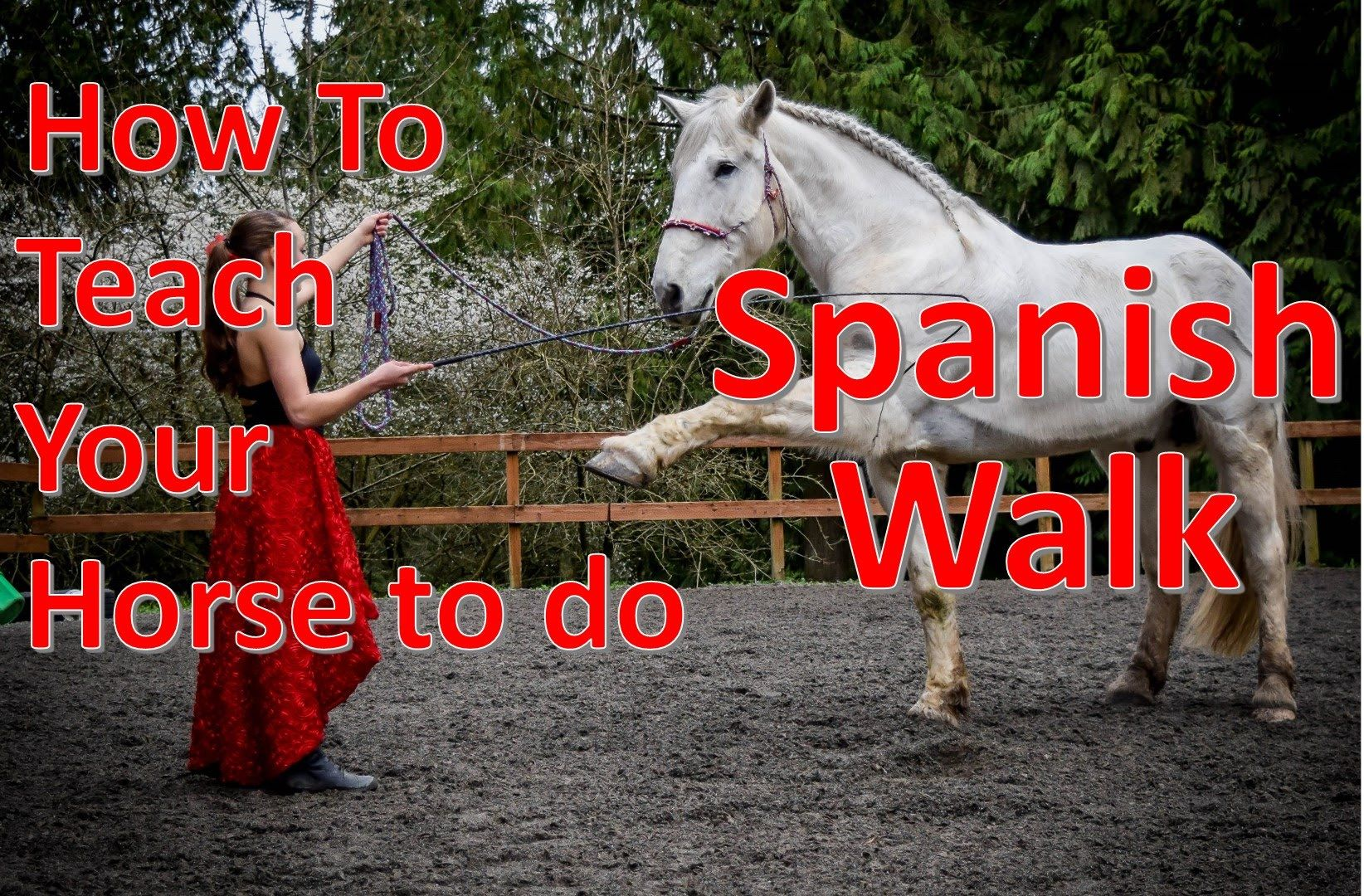 how to teach your horse the spanish walk