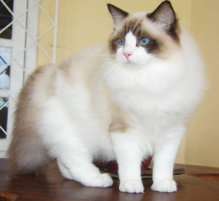 cat vs cummins