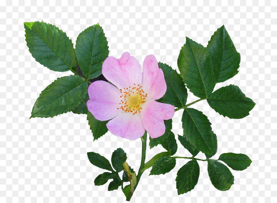 Google Search Flowers, Plants, Garden