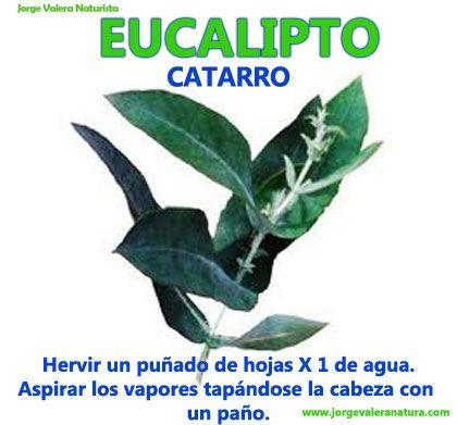 eucalipto propiedades naturales