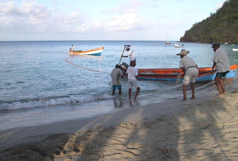 Pêche à là senne.Martinique