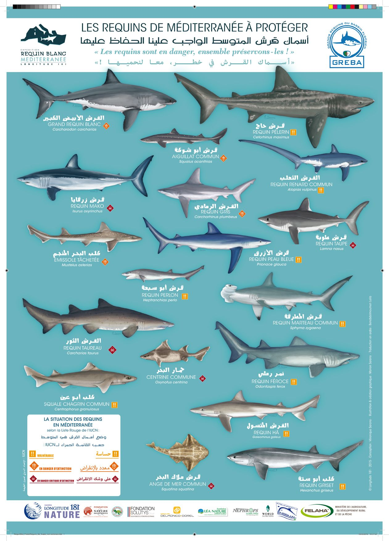 Image Result For Types Of Sharks Poster With Images