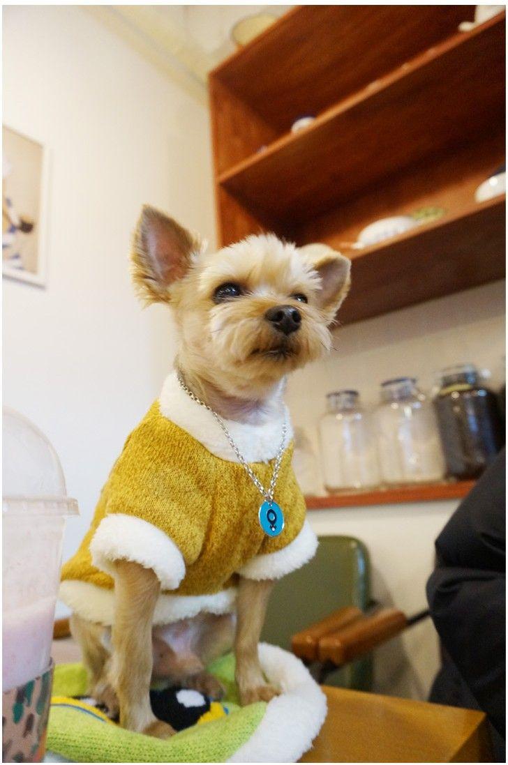 Galachi (Dog) - Pets - Special Clothing - LIFESTYLE | Korean Fashion Online Shopping Mall - KOODING.com
