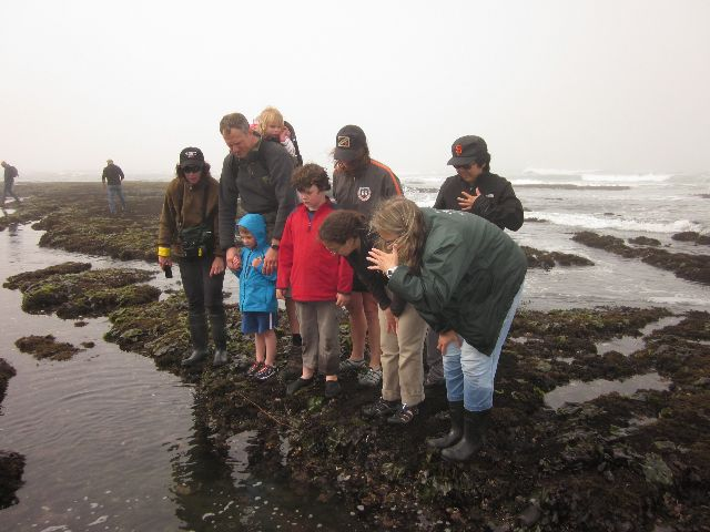 Fitzgerald Marine Reserve Tide Pools 15 Mins North Of Half Moon Bay Marine Reserves Beach Pictures Friends Tide Pools