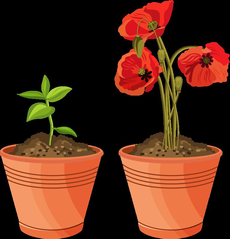 Picture 4.3   ° my garden valley °   Flower pots, Flower ...