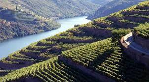 Resultado de imagem para vinícolas na Austrália