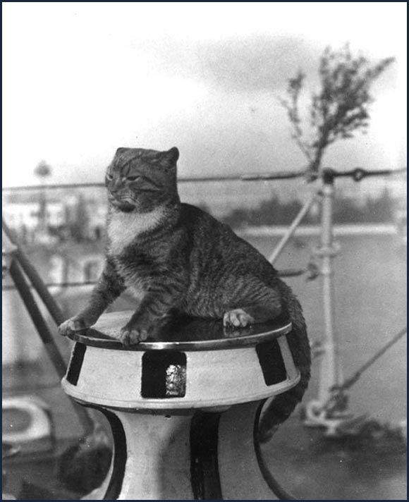 Cats In The Sea Services Ships Cat Vintage Cat Cats