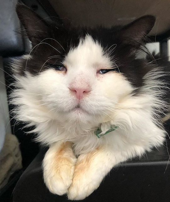 Meet The Sweet Senior Cat With Micropthalmia Who Found An Amazing Forever Home After He Was Surrendered To A Shelter By His Former Owner Senior Cat Cat Adoption Cats
