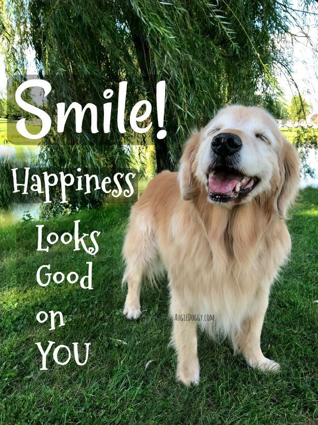 Smile Happiness Looks Good On You Quote Quote Goldenretriever