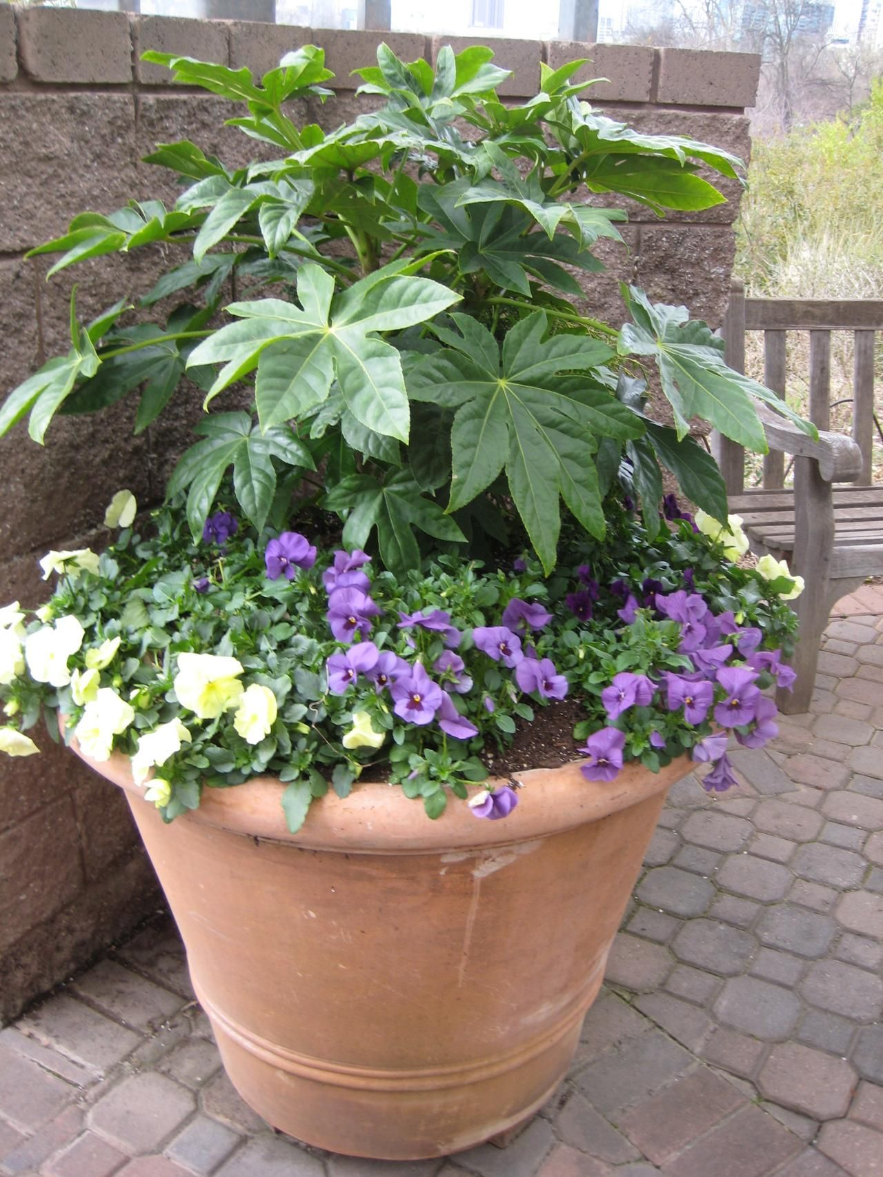 Container Gardening Anchor Containers With Evergreens Container Gardening Container Plants Container Flowers
