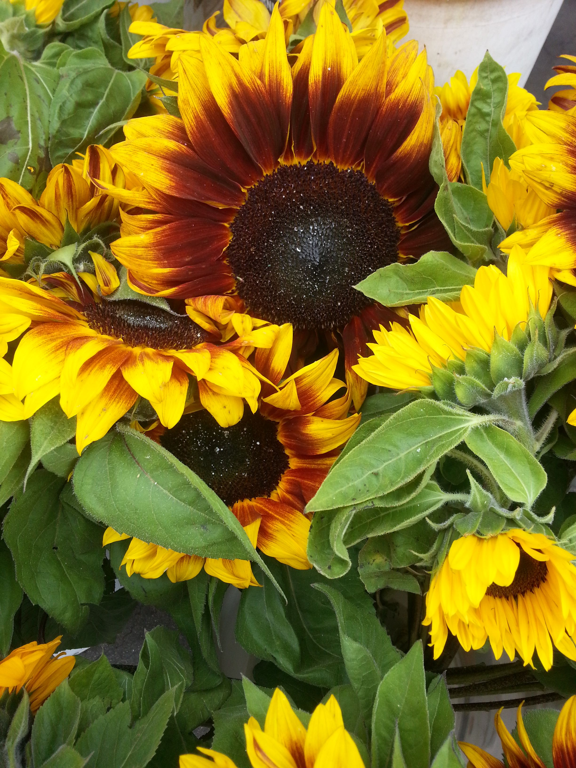 Sunflower Beautiful Flowers Flower Pictures Happy Flowers