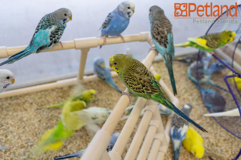 Birdie Friends Are The Coolest Birds Birdlove Pets Fly Insidepetlandflorida Petland Petlandflorida