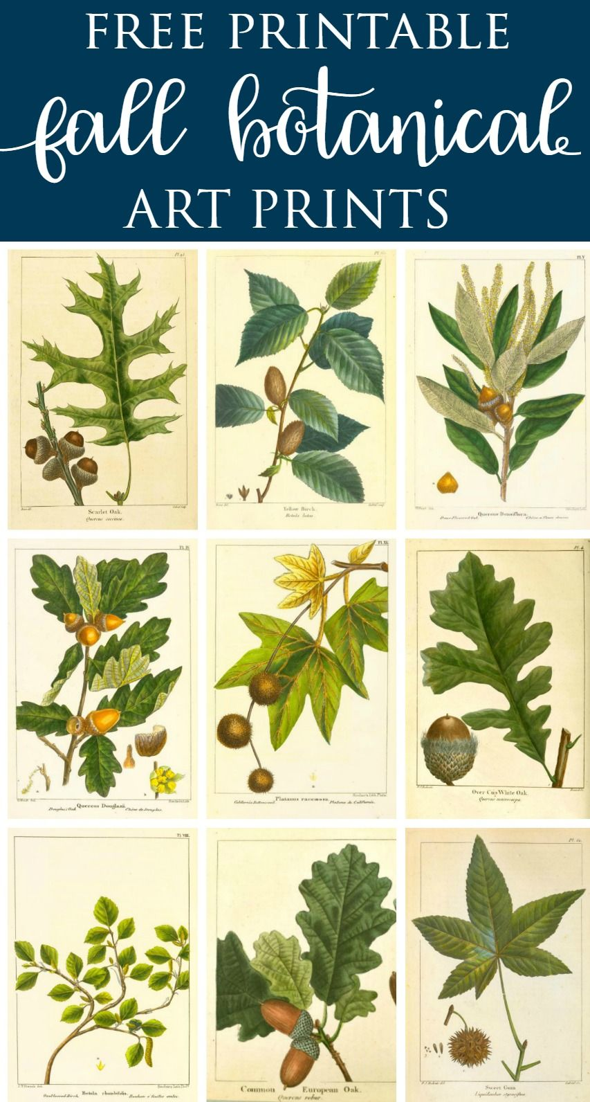 Botanical Prints Free Printable- Fall Vintage Botanical Prints