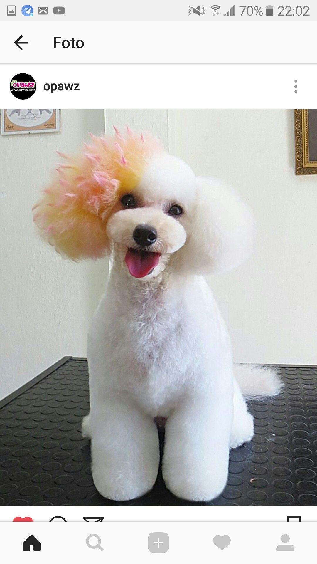 Doggrooming Dog Grooming Dog Grooming Styles Creative Grooming