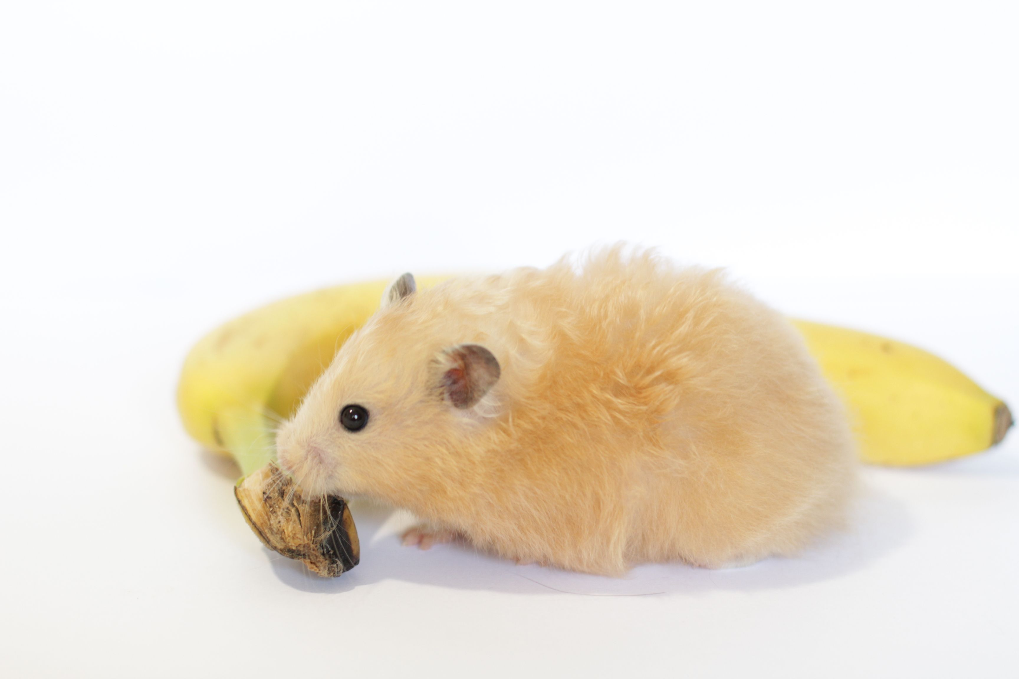 I Think It S Almost Nice Enough Out To Visit The Frozen Banana Stand With The Hamsters Who Wa Arresteddevelopment Banana Ha
