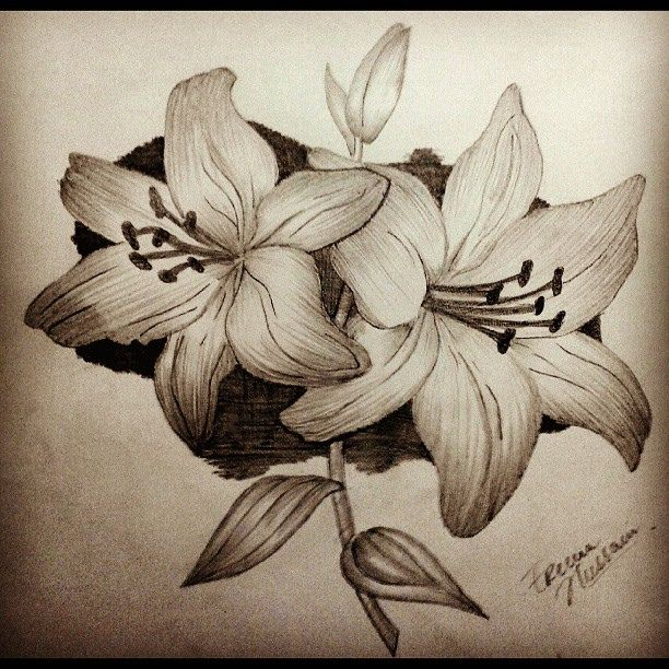 Pencil drawings of flowers art pencil sketch