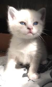 Adopt Starlet On Cute Animals Fur Babies Kittens