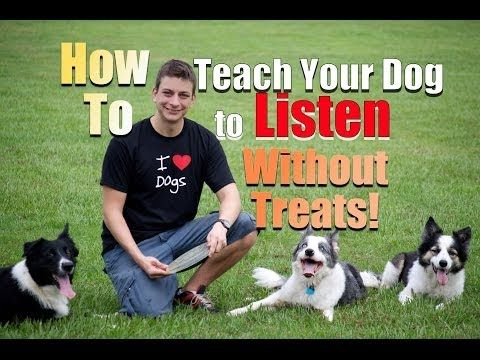 How To Get Your Dog To Listen Without Treats Youtube Dog