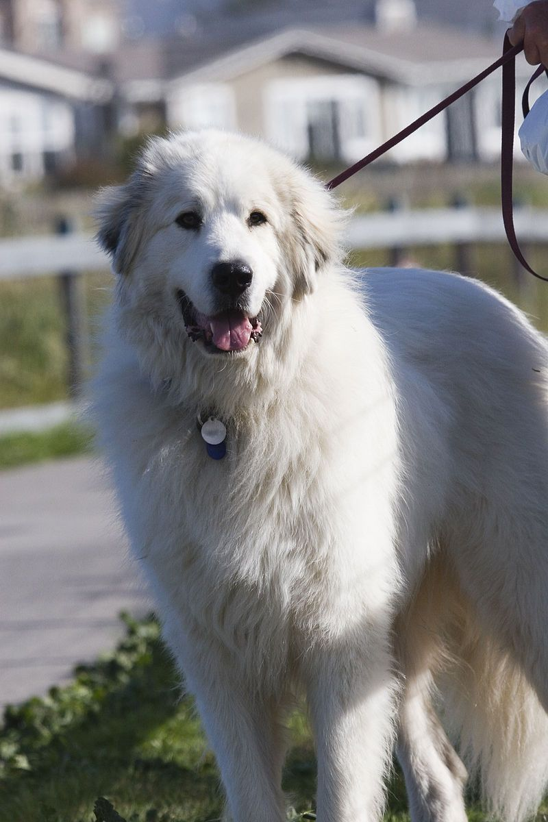 Biggest Dogs In The World | Dog Lover | Great pyrenees dog