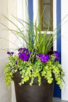 Three easy steps to planting a garden vase that will be a beautiful focal point for your front porch, deck, or patio. Perfect proportions every time!