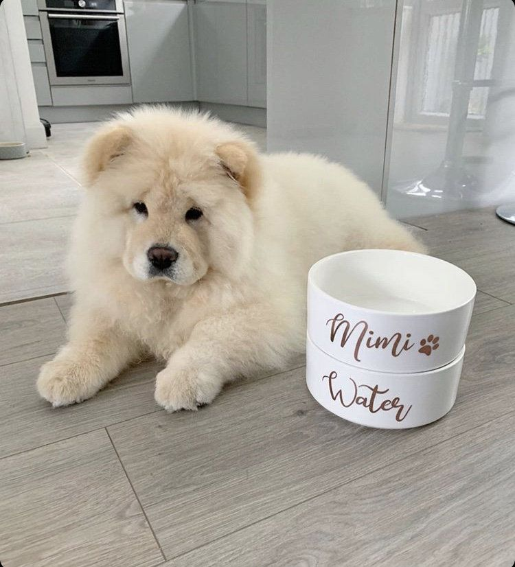 Supplier Of Mimi The Chow S Personalised White Ceramic Labelled