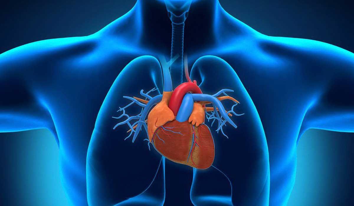 أين يوجد القلب فى جسم الإنسان Superhero Batman Character