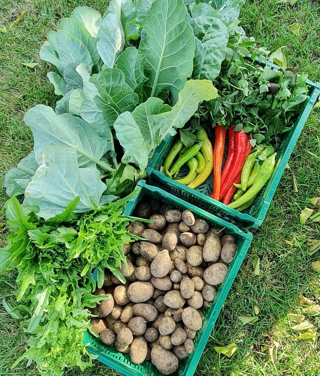 Eigene Nahrung Anbauen Unser Garten Hat Gut 300 Qm Fairerweise Muss Ich Sagen Dass Moppi Grund Und Boden Gepachtet Hat Und Ich Mich Mit Meinen Vielen Blume