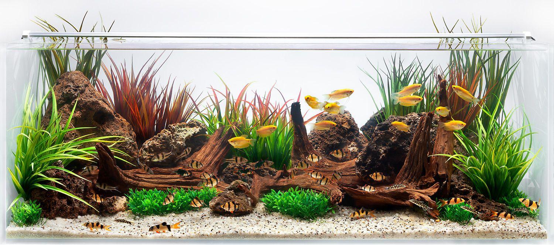 Aquarium Design Group - An Aquascape for Gold Gourami ...