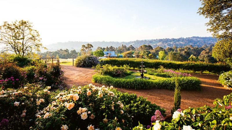 Rose garden at Sunnyhurst Winery, Bridgetown, WA is part of Backyard Rose garden - How a couple started out looking for a place to plant a vineyard and ended up with a glorious rose garden as well