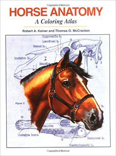 Horse Anatomy A Coloring Atlas Robert A Kainer Thomas O